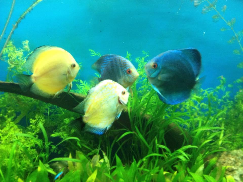 Local fish and aquarium stores in for Jims exotic fish