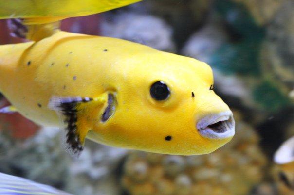 The aquarium sandy ut for Fish stores in utah