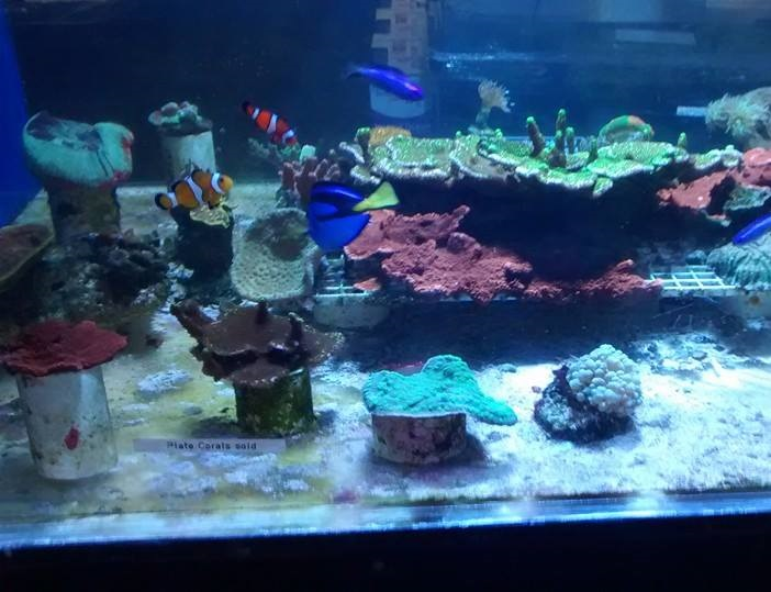 Lucky tropical fish las vegas nv for Aquarium fish stores near me