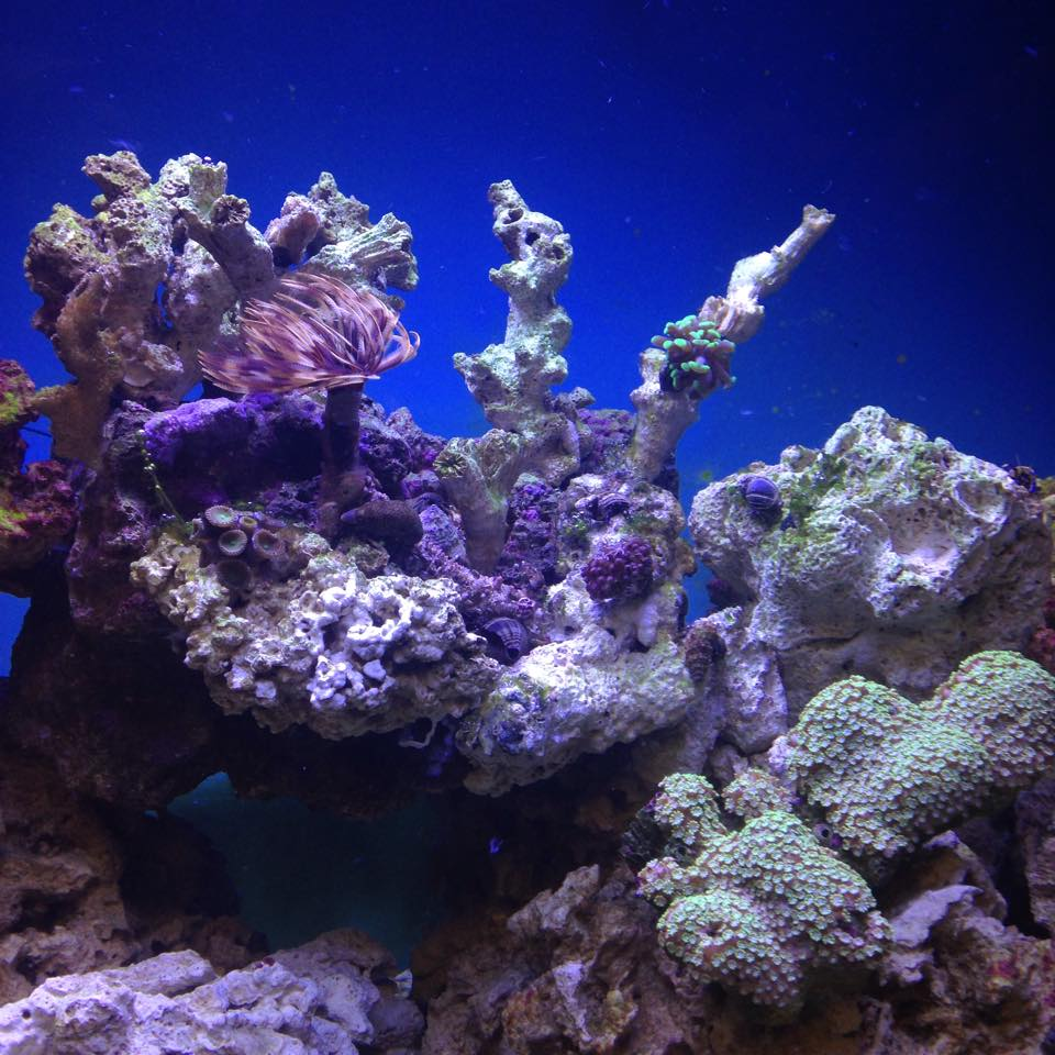 Local fish and aquarium stores in sd for Saltwater fish stores near me
