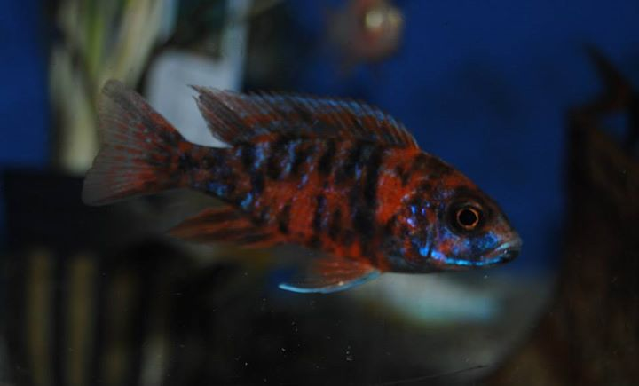 Columbia pet center columbia mo for Pet fish near me