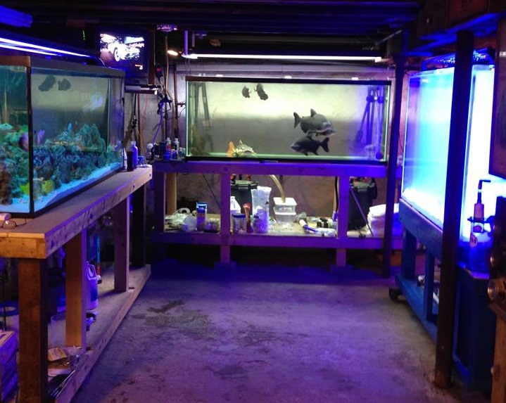Lovely pets quincy ma for Fish stores in ma