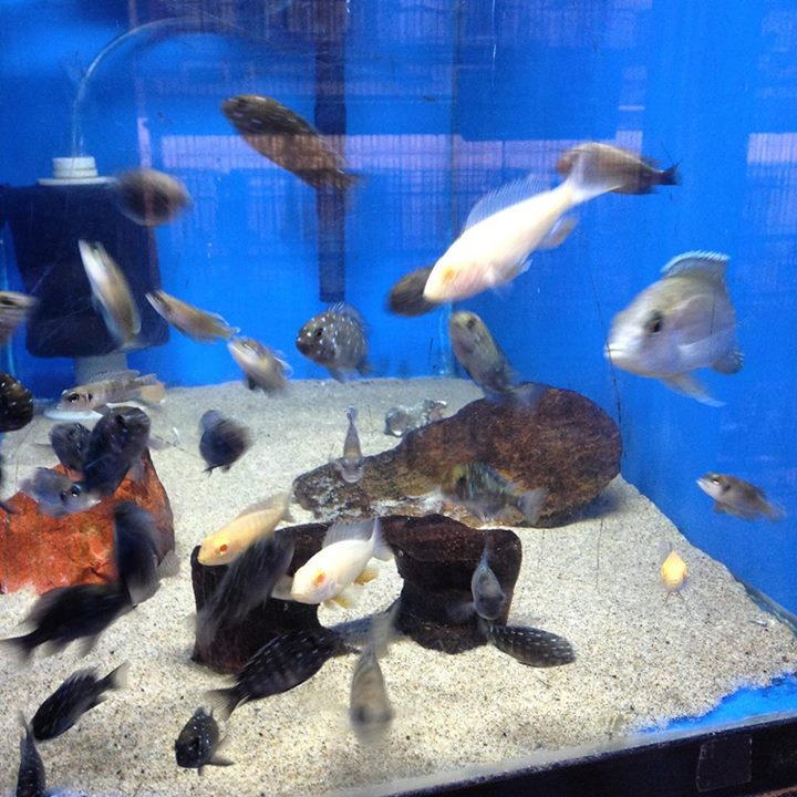 Local fish and aquarium stores in hi for Tropical fish near me