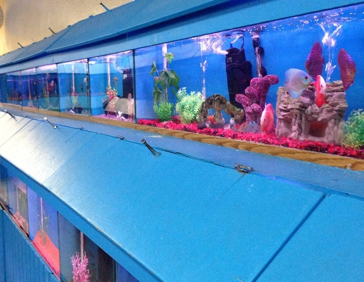 Local fish and aquarium stores in ca for Fish supplies near me