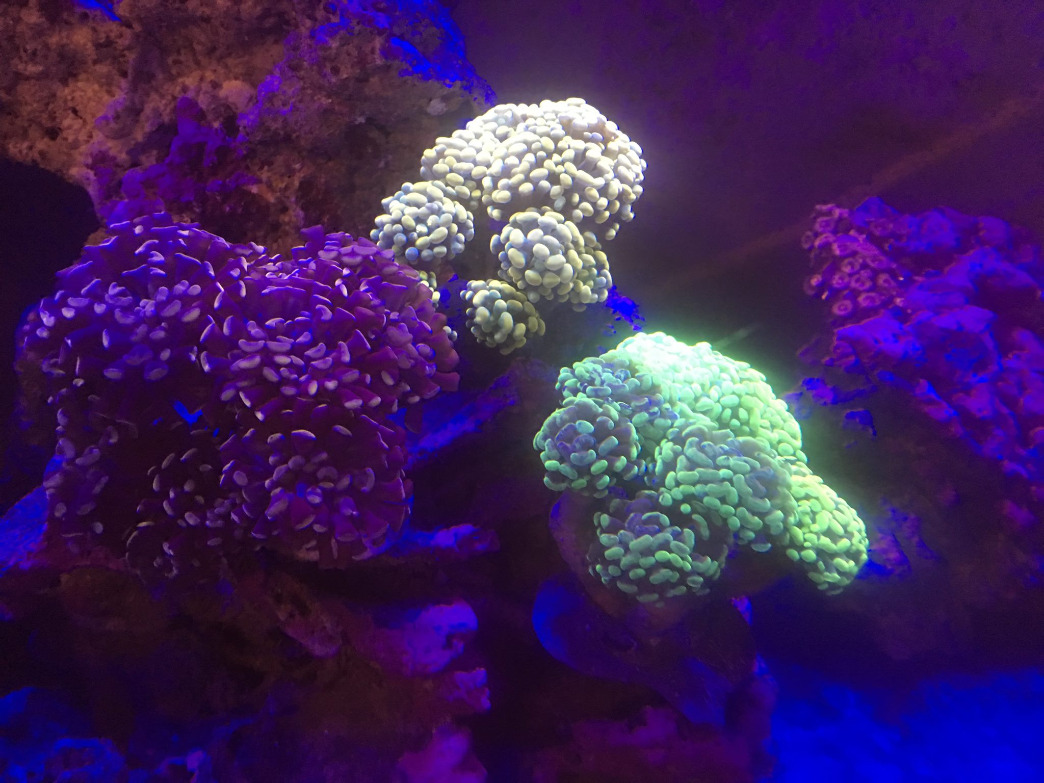 Holistic holistic stores near me for Saltwater fish stores near me