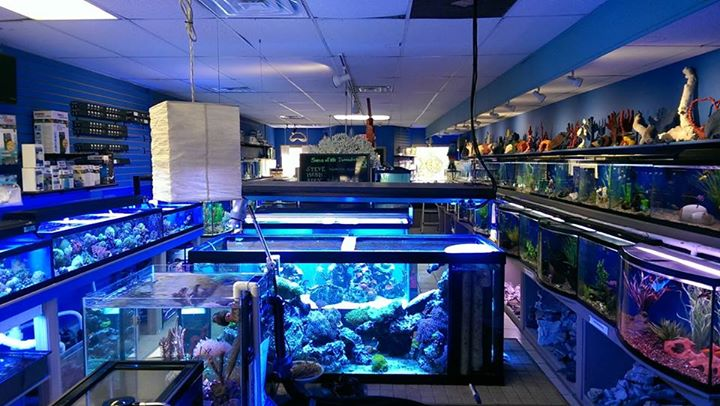 Local fish and aquarium stores in il for Fish stores around me
