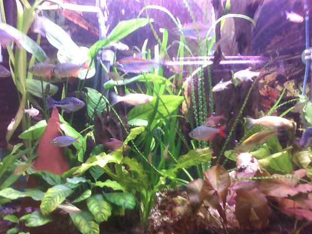 Local fish and aquarium stores in fl for Fish and pets unlimited