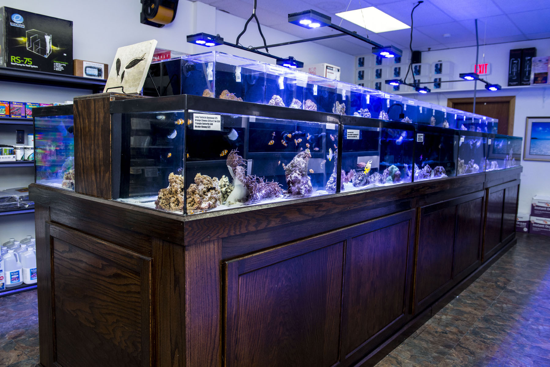 Reef plus north aurora il for Tropical fish shop