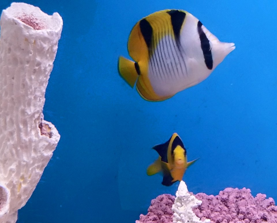 Tropical fish haven tropical fish fish 5412589 800 600 for Tropical fish near me