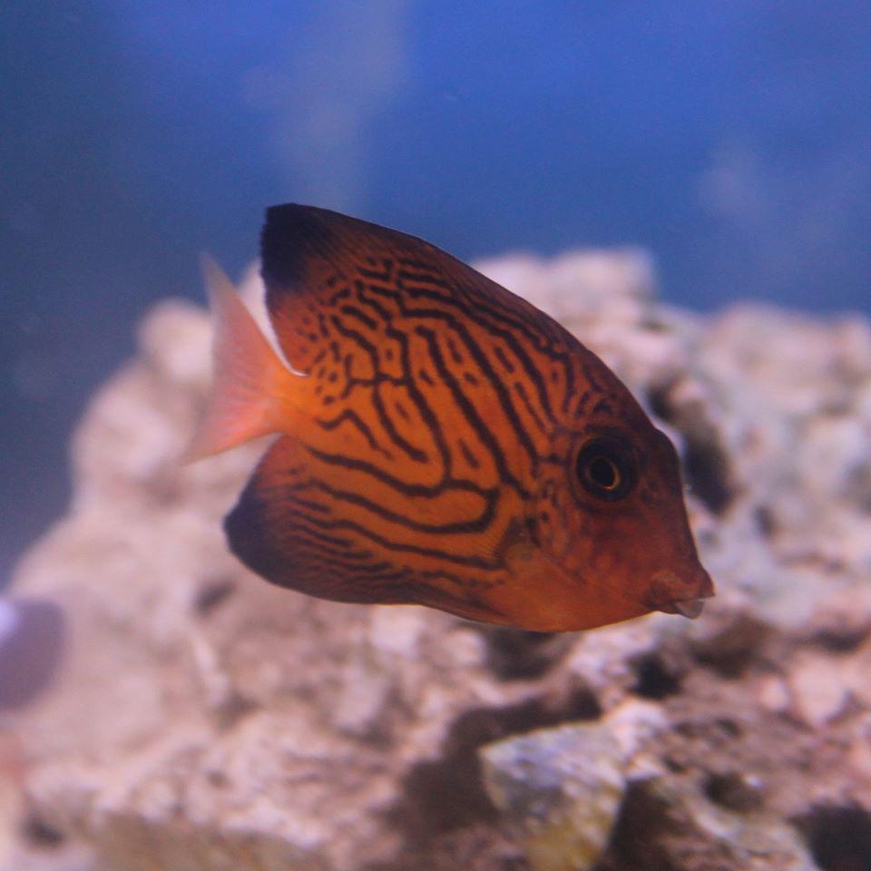 Local Fish and Aquarium Stores in TX | FishStoresNearMe.com