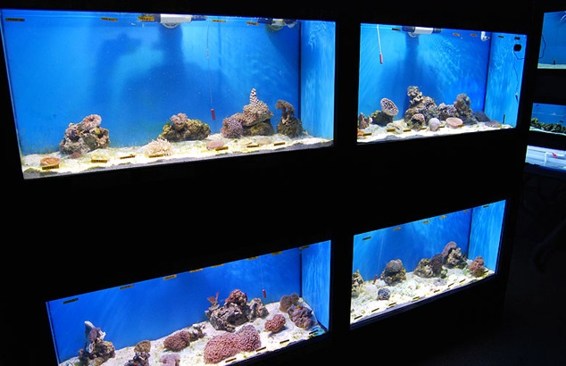 Local fish and aquarium stores in pa for Pet stores with fish near me