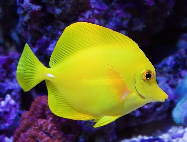 Local fish and aquarium stores in fl for Exotic tropical fish