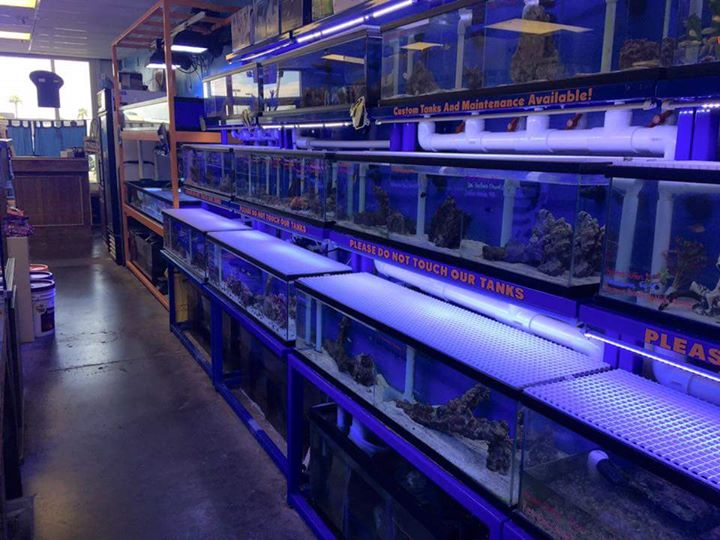 Reptiles n reefs henderson nv for Fish aquarium stores near me