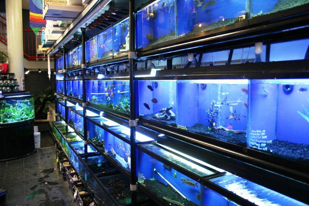 Selmers pet land south huntington ny for Pet stores with fish near me
