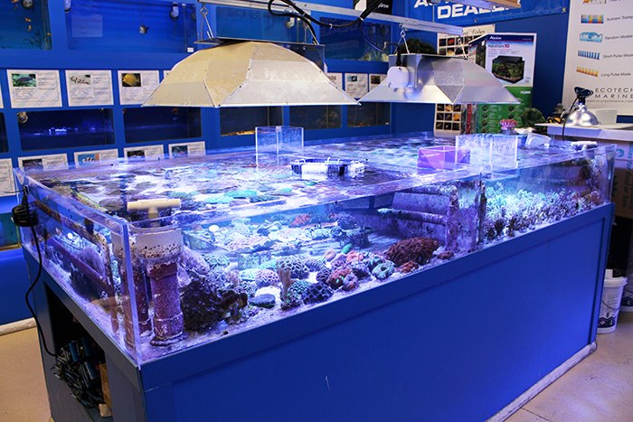 Local fish and aquarium stores in co for Salt water fish store