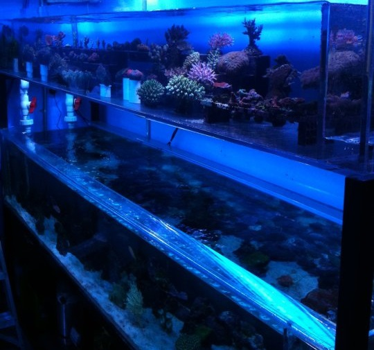Bob 39 s tropical fish los angeles ca for Exotic fish store near me