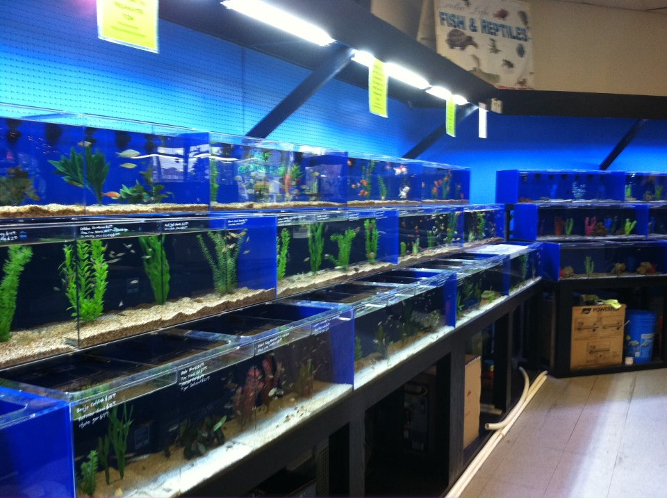 saltwater fish store near me and aquarium is tropical