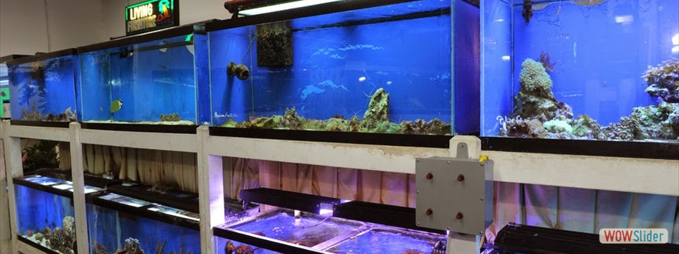 Aquatic interiors seacave akron oh for Fish aquarium stores near me