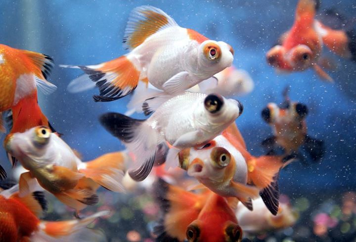 Fish and pets rochester mn for Pet stores with fish near me