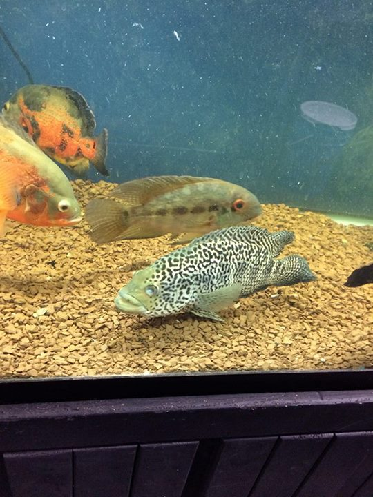 Local fish and aquarium stores in pa for Tropical fish near me