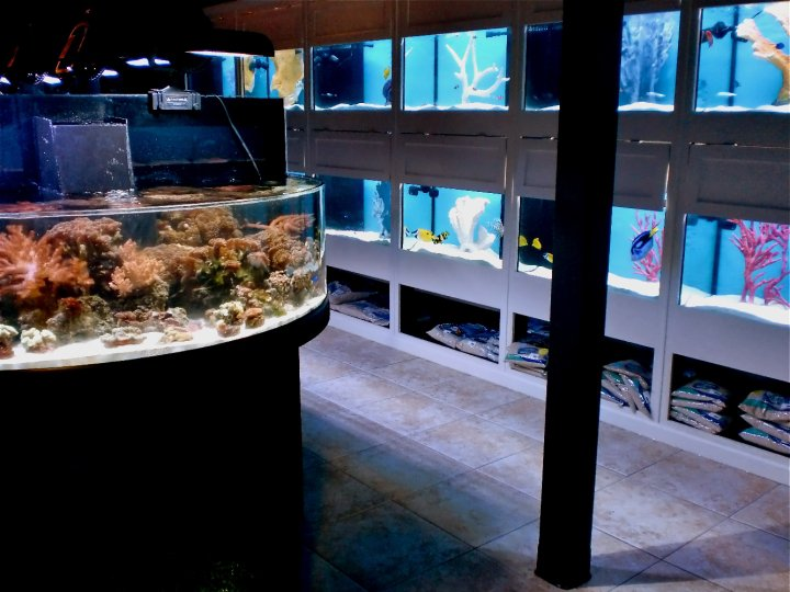 Rift 2 reef aquatics flower mound tx for Fish stores around me