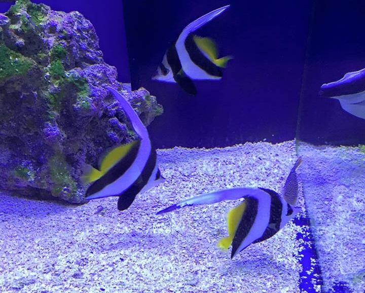Aquariums unlimited virginia beach va for Aquarium fish store near me
