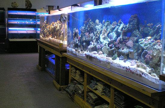 Local fish and aquarium stores in mi for Fish pond supplies near me