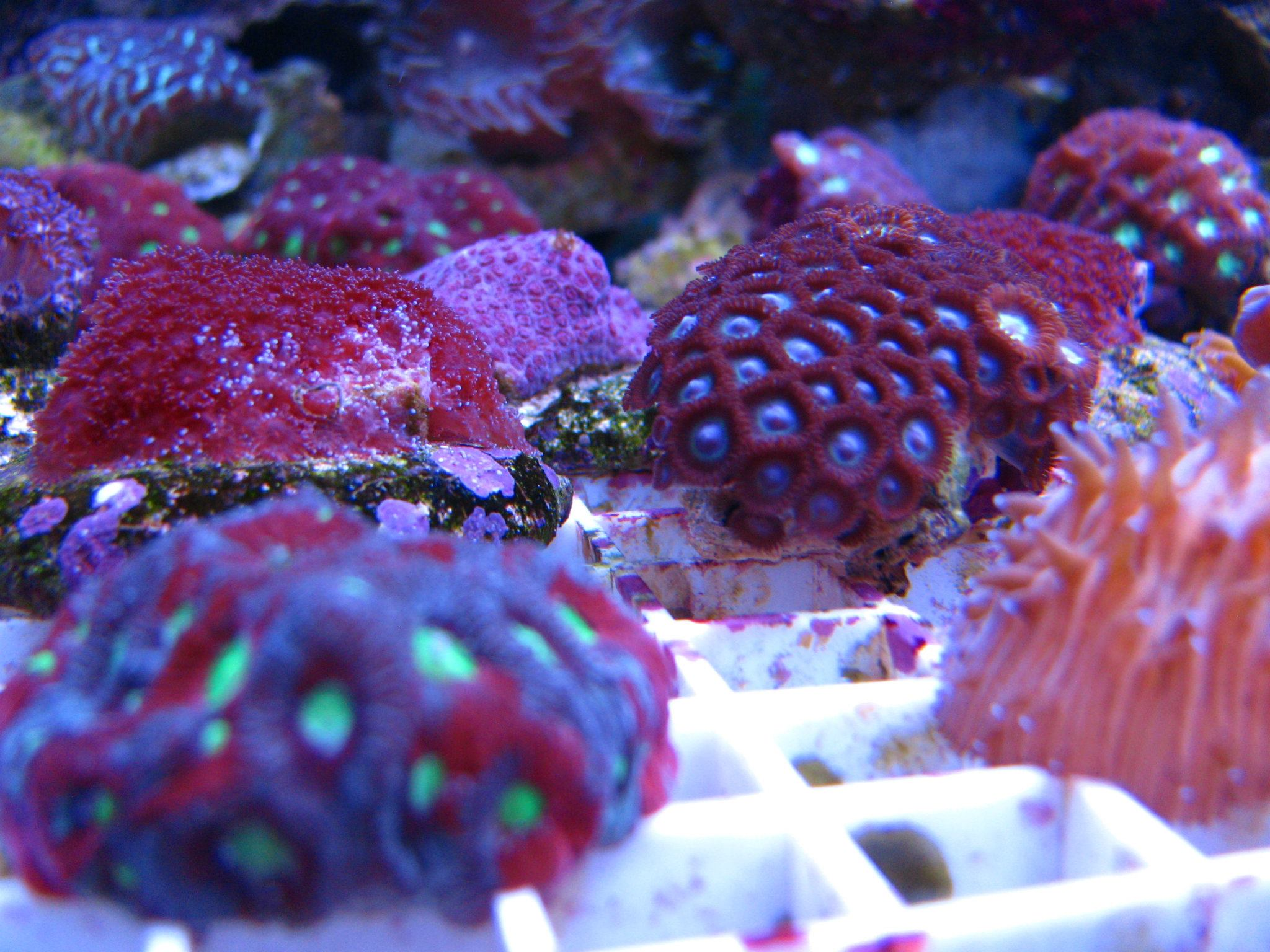 Local fish and aquarium stores in ny for Fish town usa