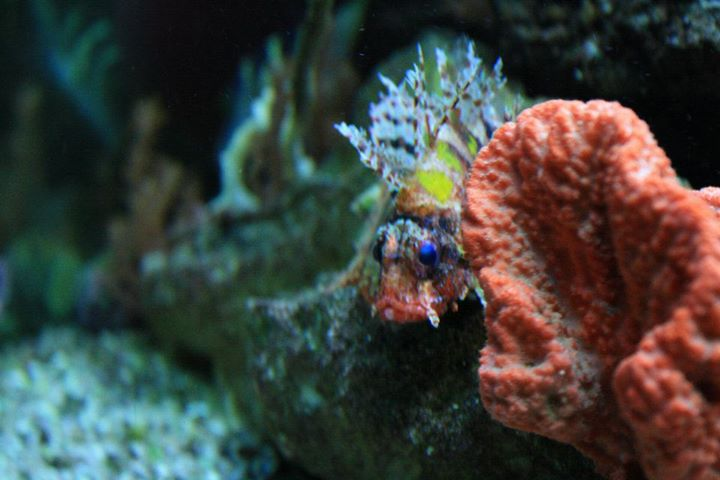 Reef escapes jonesboro ar for Saltwater fish stores near me