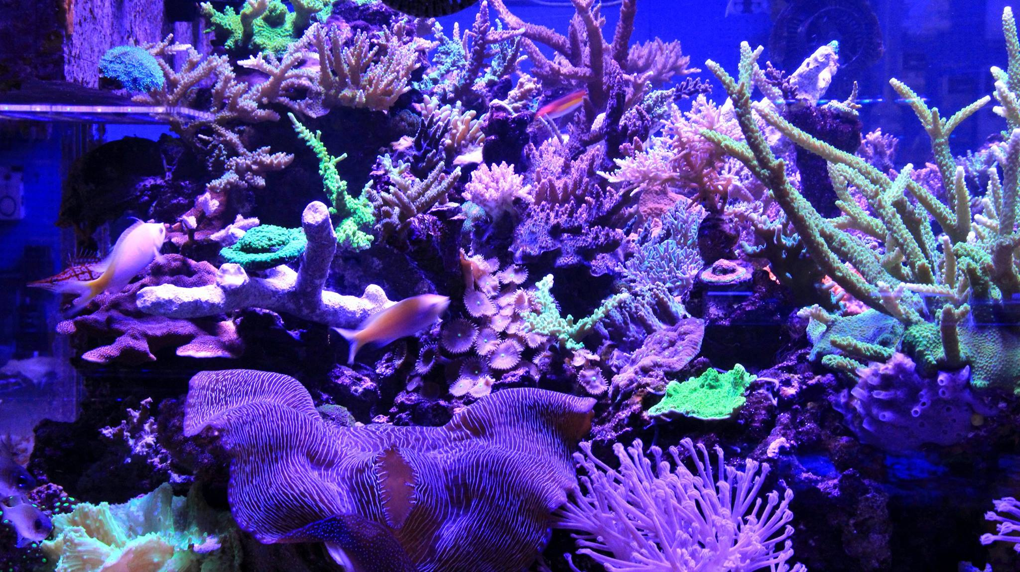 Local fish and aquarium stores in ct for Old saybrook fish house