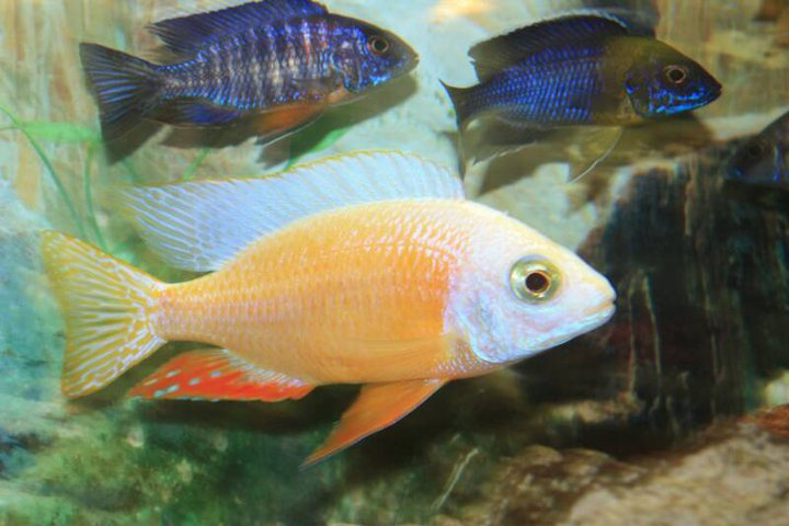 Exotic aquatics and pets kendallville in for Exotic fish store near me