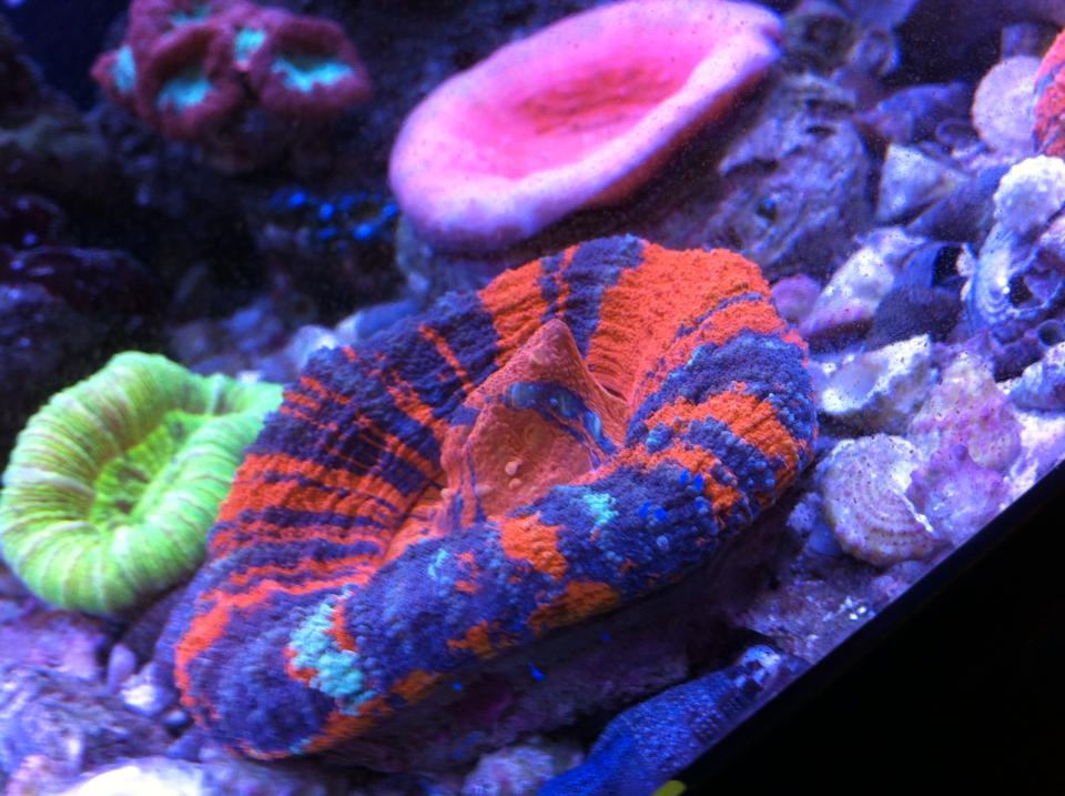 Local Fish And Aquarium Stores In Wv