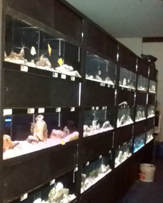 Local fish and aquarium stores in ny for Fish aquarium stores near me