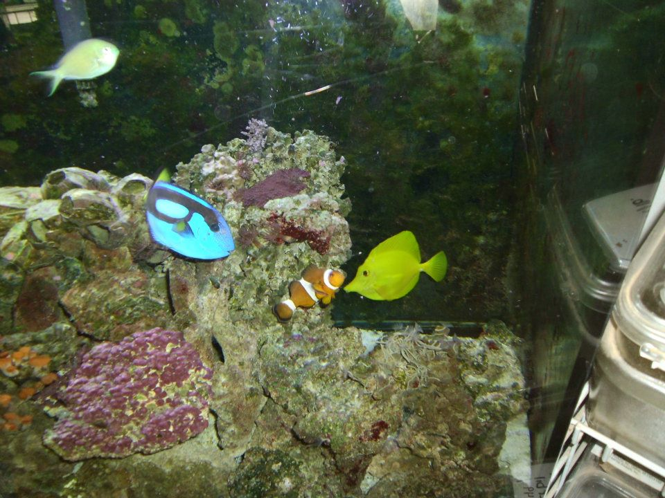 fish and more pet store sylva nc