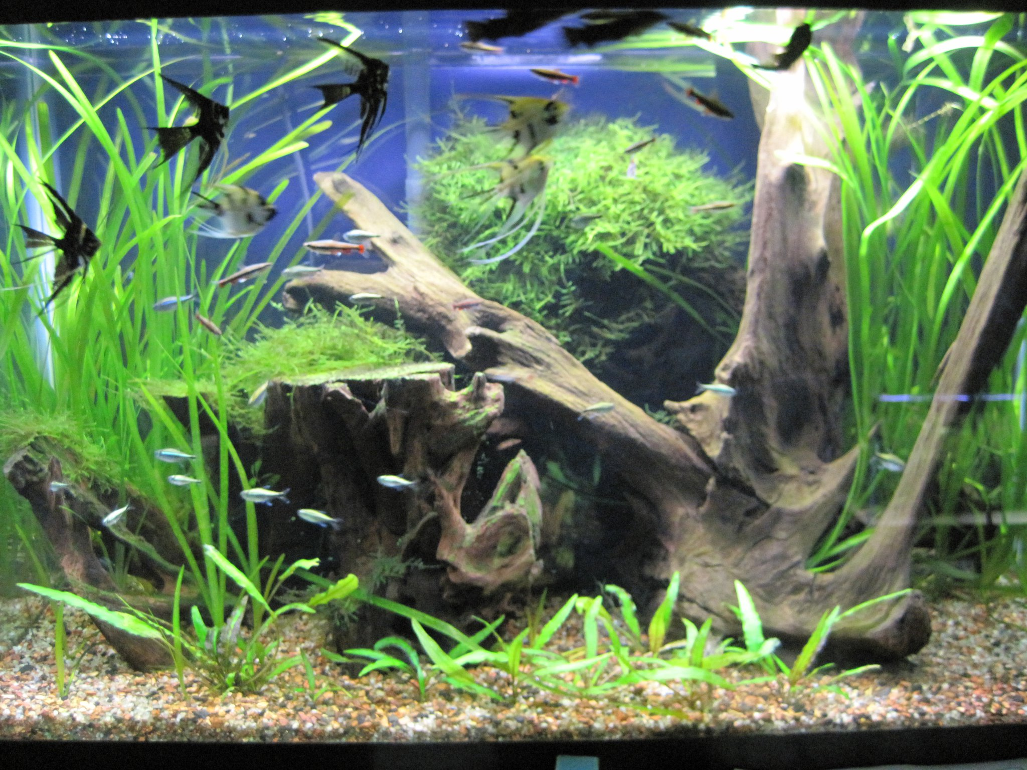 Freshwater fish near me - Brief Description Animal City Stocks Over One Hundred Fifty Freshwater Aquariums Of Common And Exotic Fish F View More Information