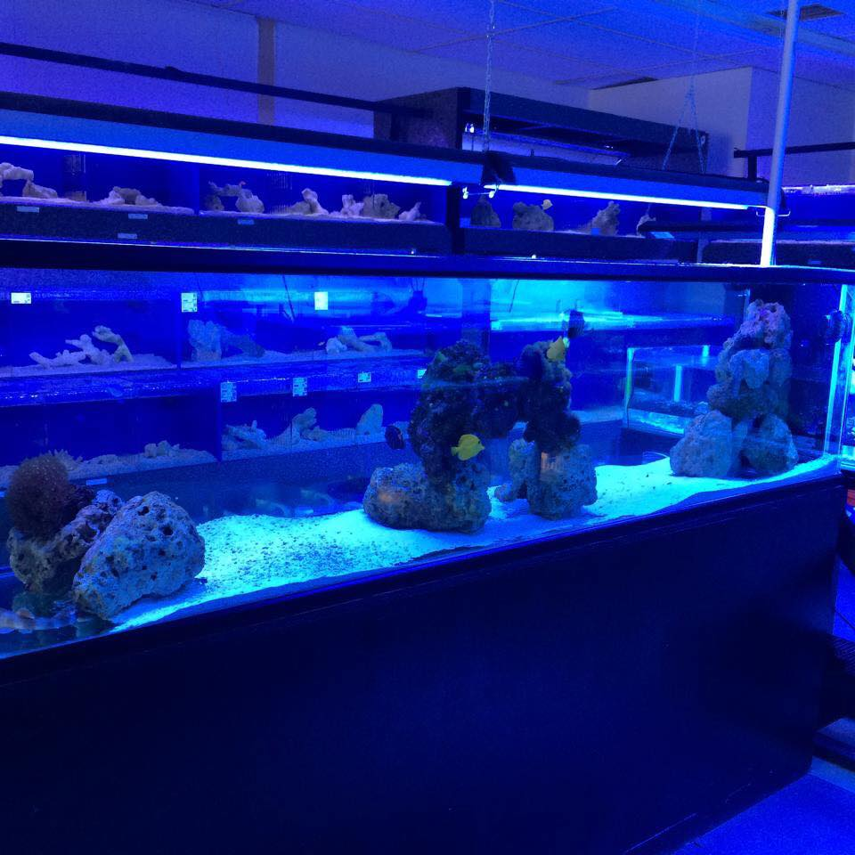 Local Fish and Aquarium Stores in FishStoresNearMe.com