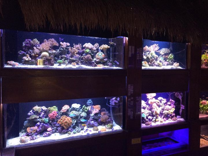 Local fish and aquarium stores in il for Fish aquarium stores near me