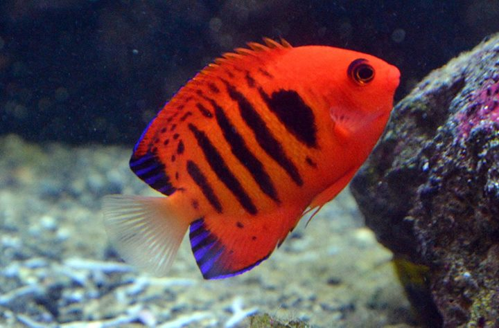 Niko 39 s reef pflugerville tx for Saltwater fish stores near me