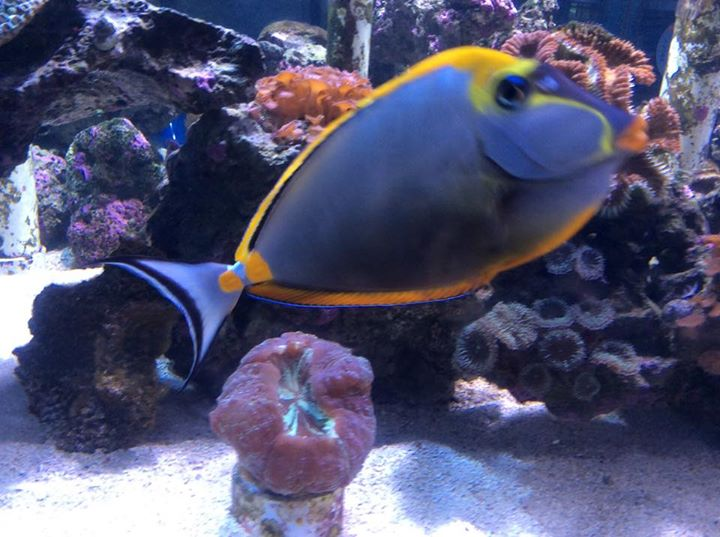 Local fish and aquarium stores in fl for Saltwater fish stores near me