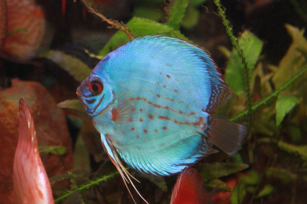 Blue fish aquarium grandville mi for Tropical fish near me