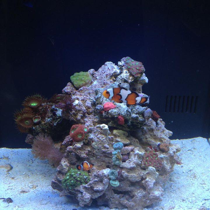 Local Fish And Aquarium Stores In Ky