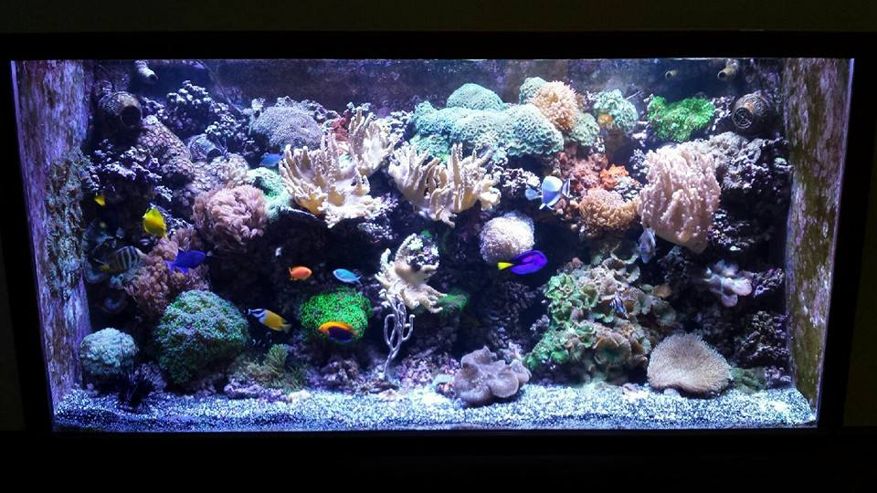 Marine solutions by reef keepers custom aquariums st for Saltwater fish stores near me