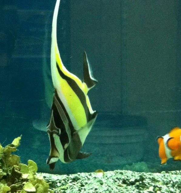 local fish and aquarium stores in co ForTodd S Tropical Fish