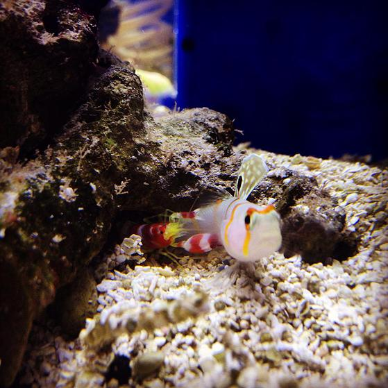 Aquatica reef supply louisville ky for Saltwater fish stores near me