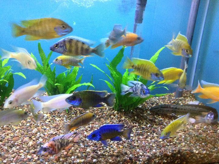 Local fish and aquarium stores in il for Pet fish near me