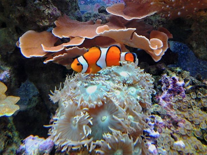 Local fish and aquarium stores in mo for Exotic fish stores near me