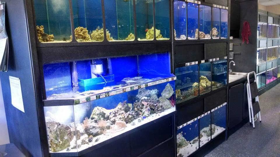 Under the sea pets wellsboro pa for Fish supplies near me
