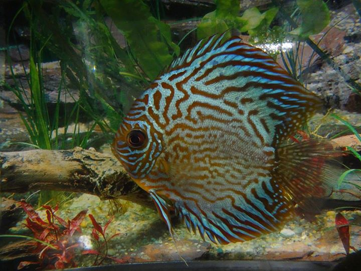 Saltwater aquarium near me reef aquariums for saltwater for Where to fish near me
