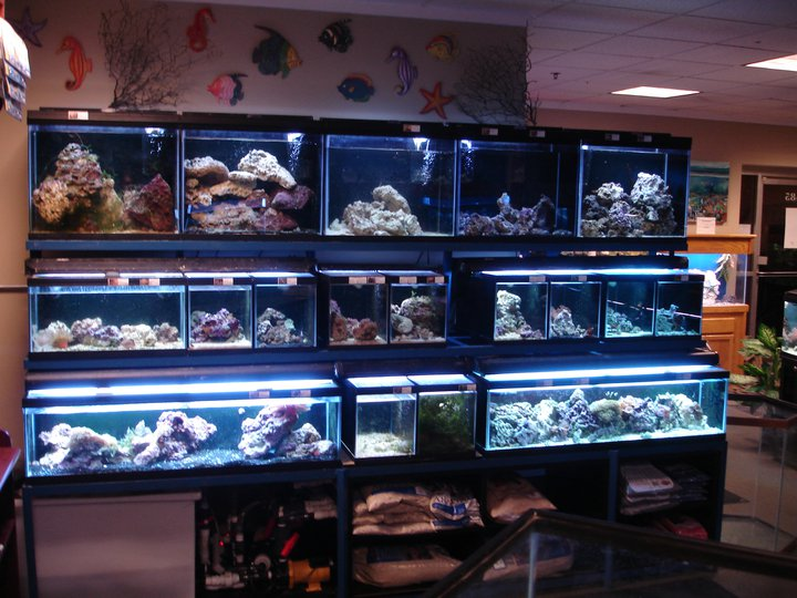 Dc aquarium store dc aquarium store dc aquarium store for Pet store near me fish