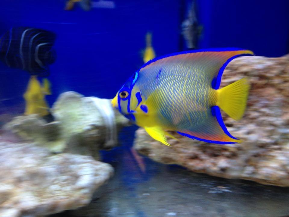 Local Fish And Aquarium Stores In